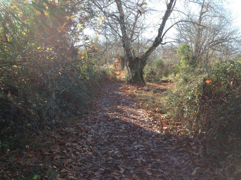Ruta en la Sierra de Aracena