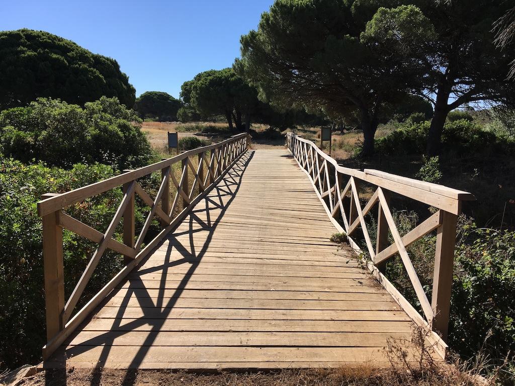 Puente en la Pinada del Río Roche