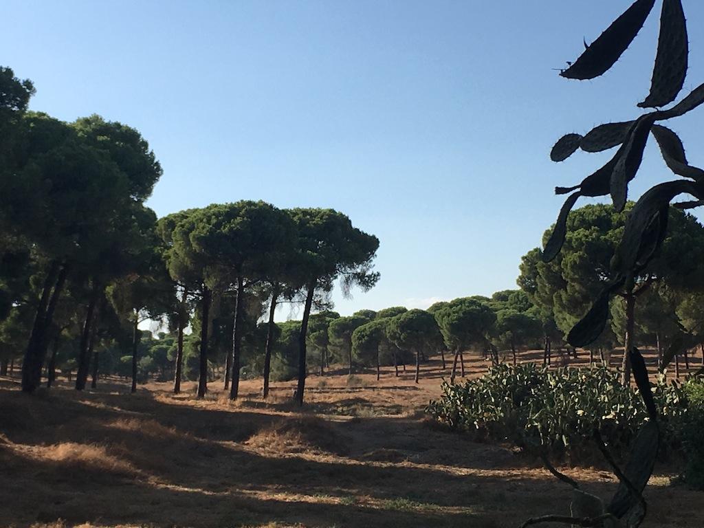 Visita guiada la Cañada de llos Pájaros