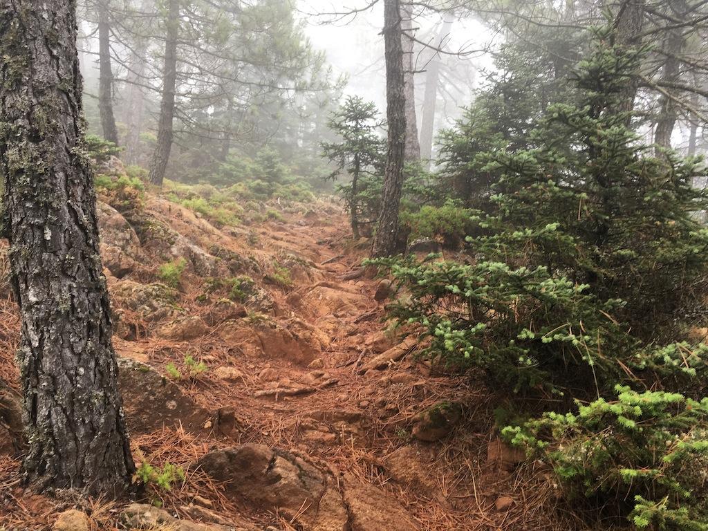 El Pinsapar de Sierra Bermeja