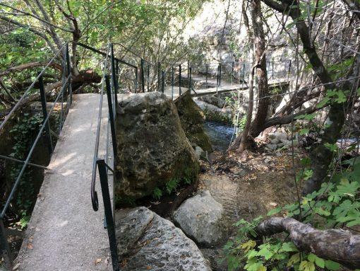 Por el Pinsapar al Bosque