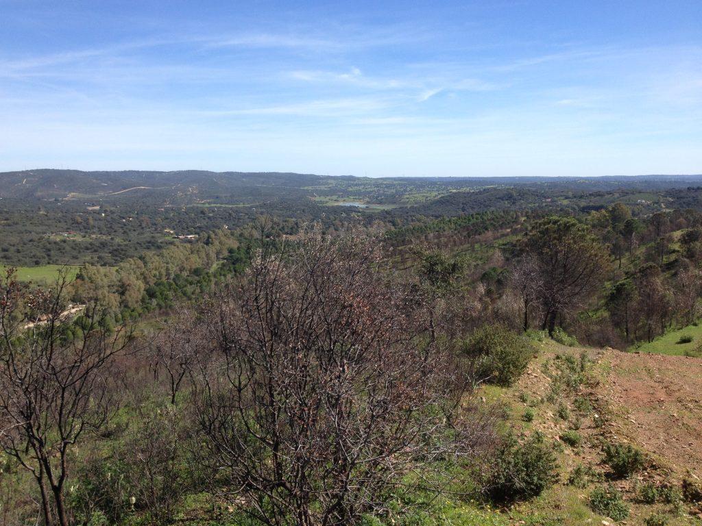 Ruta de los Brezales en El Ronquillo.