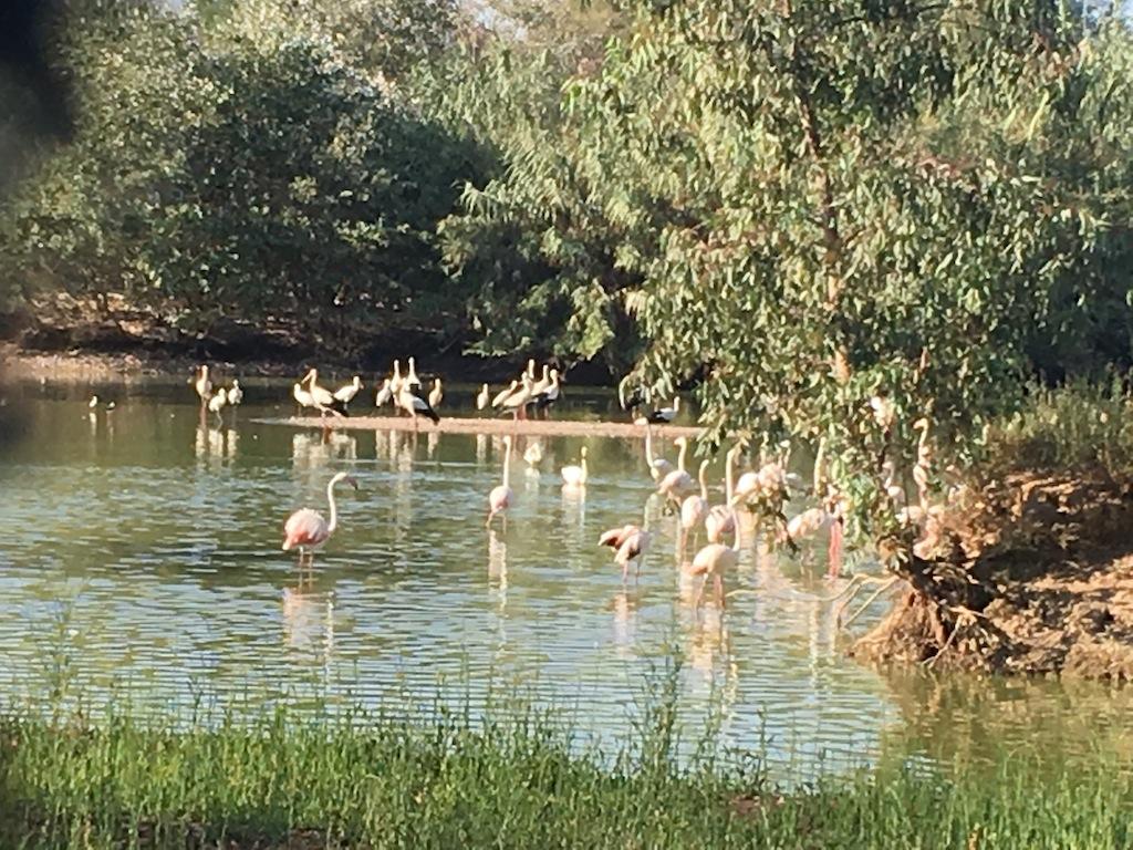 Flamencos en la Cañada de los Pájaros