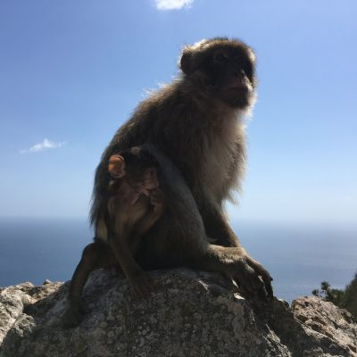 Adiós Gibraltar