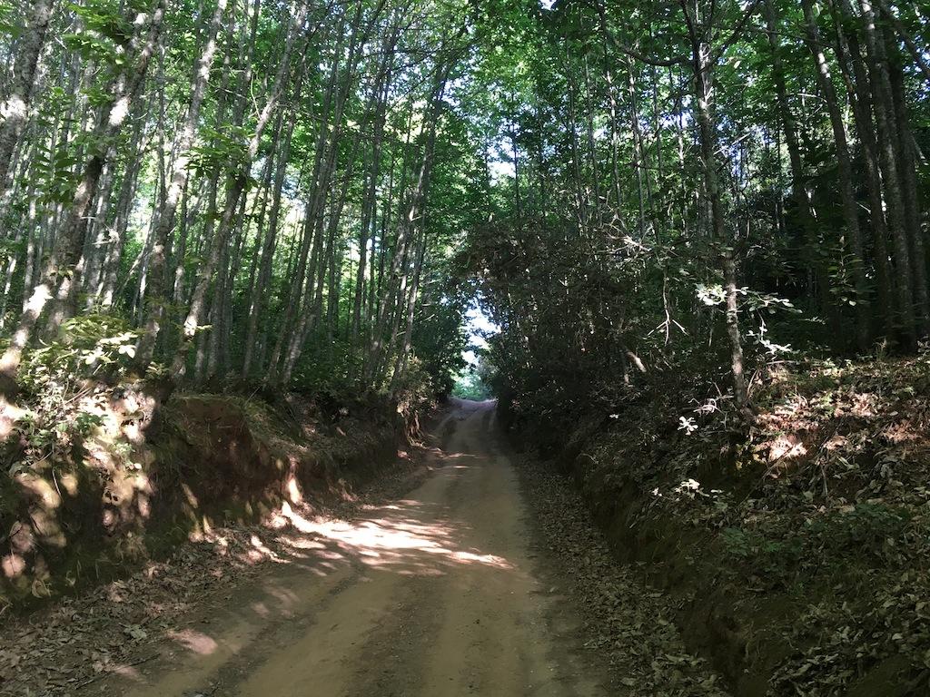 sendero de los Castañares de Constantina