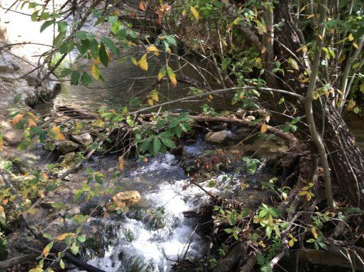 Al Bosque por el Pinsapar