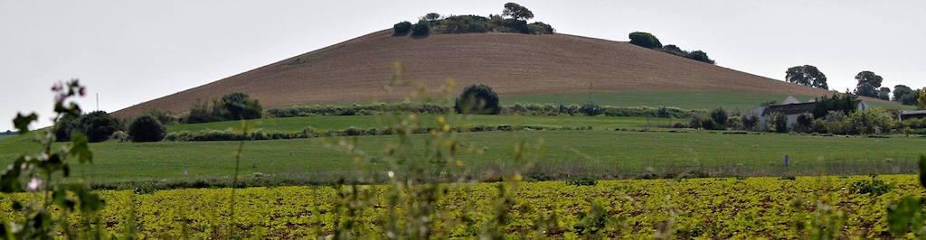 De olivos cereales y torres