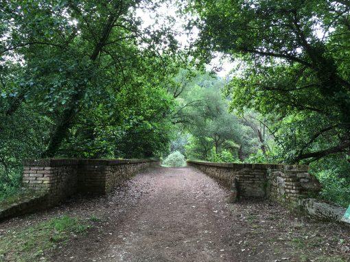 Sendero Molino del Corcho y Laderas de Cazalla