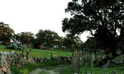 Arroyo de las Cañas