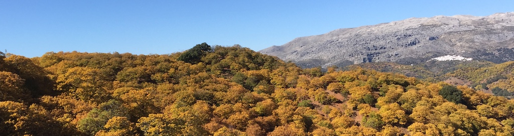 bosque de cobre nivel tres