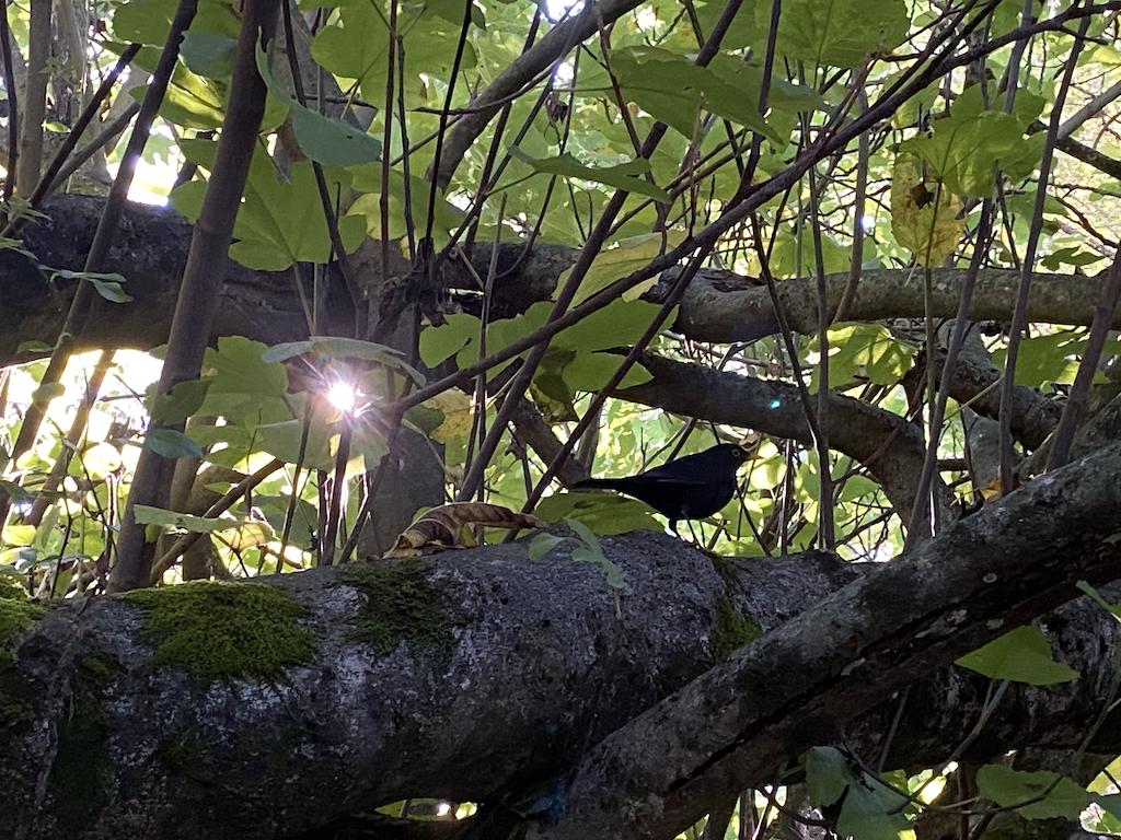 pájaro y sol en majaceite